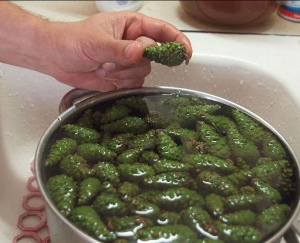 зеленые шишки в кастрюле