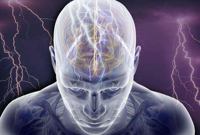 Модель строения мозга
