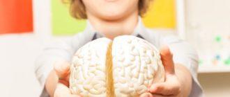 мальчик держит мозг