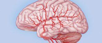 Мозг и кровотоки