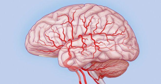 Витамины для улучшения кровообращения головного мозга