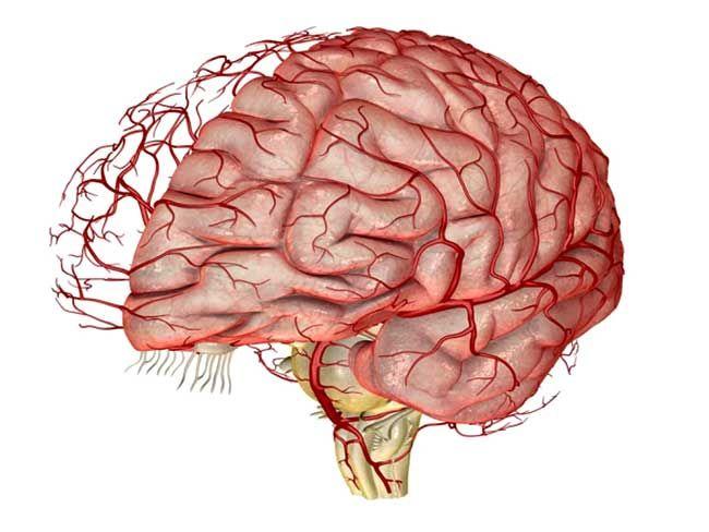 Народные средства для сосудов головного мозга для пожилых