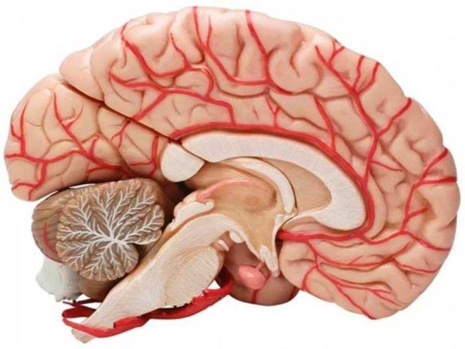 Упражнения для расширения сосудов головного мозга
