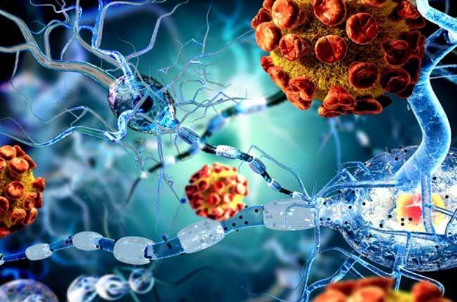 Клетки энцефалита