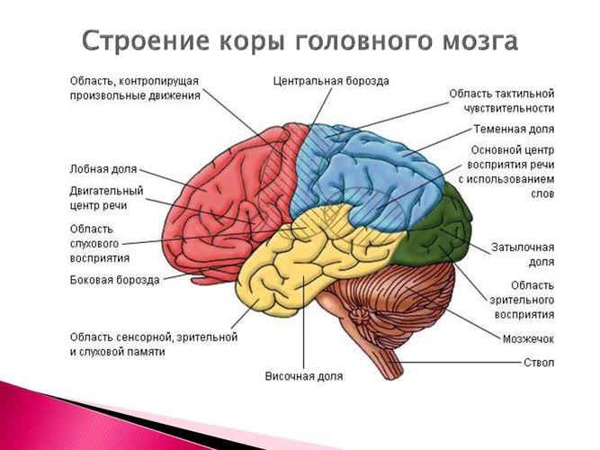 головная боль при опухоли головного мозга симптомы