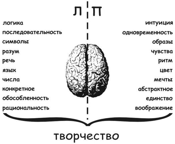 Функции полушарий