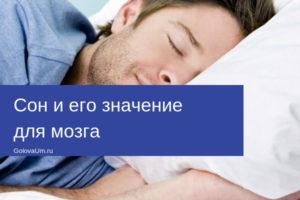 Сон и его значение для мозга